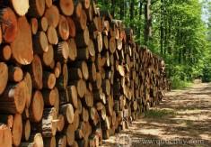 Xuất khẩu gỗ có cơ hội đạt 8 tỉ USD